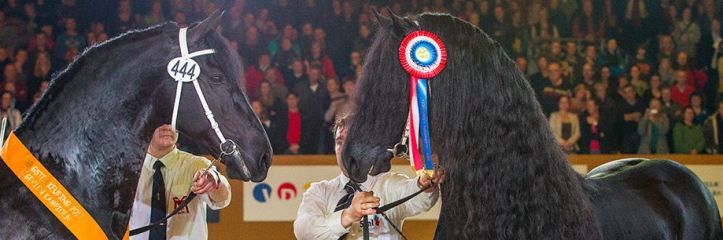 http://google-exclusive.com KFPS Friesenhengste- Frisian Stallion 2014